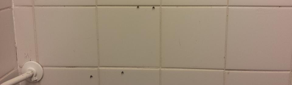 rioolvliegjes in de douche